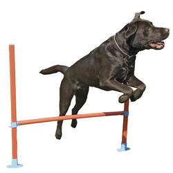 Agility Hop forhindring stang